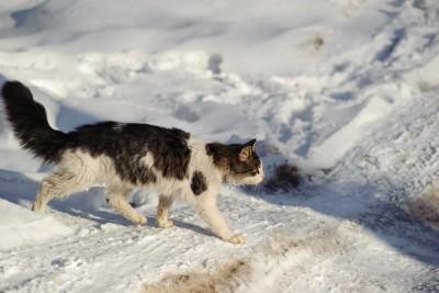 Geaard door de sneeuw