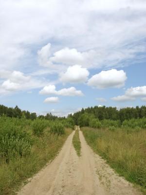 Het pad naar natuurlijk zien