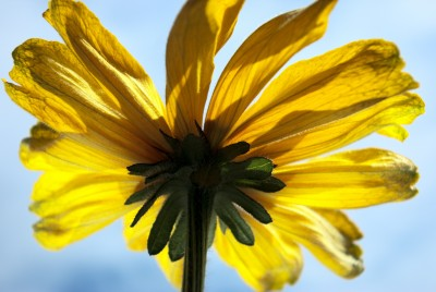 Bewustzijn en zonnebloem