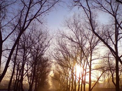 Nieuwe ogen zien gouden bomen