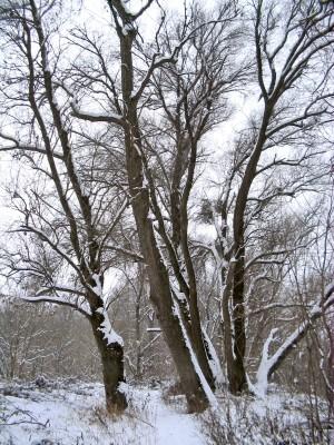 Met blote voeten door de sneeuw