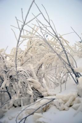 De verfrissing van sneeuw