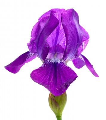 Mijn oog ziet een paarse bloem