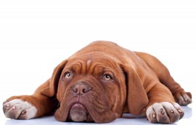 Wat helpt bij slapeloosheid?